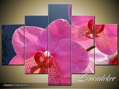 Obraz na zeď-květy- 5D F000892