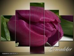 Obraz na zeď-květy- 5D F000993