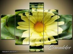 Obraz na zeď-květy- 5D F001007