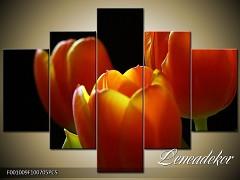 Obraz na zeď-květy- 5D F001009