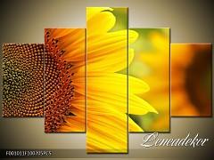 Obraz na zeď-květy- 5D F001011