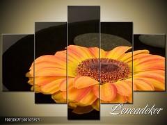 Obraz na zeď-květy- 5D F001067