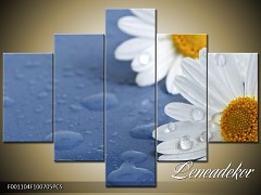 Obraz na zeď-květy- 5D F001104