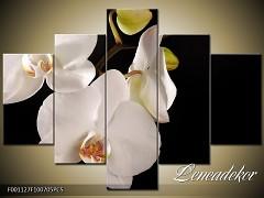 Obraz na zeď-květy- 5D F001127