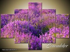 Obraz na zeď-květy- 5D F001166