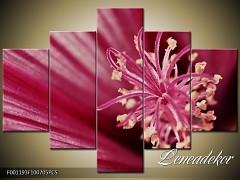 Obraz na zeď-květy- 5D F001193
