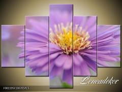 Obraz na zeď-květy- 5D F001195