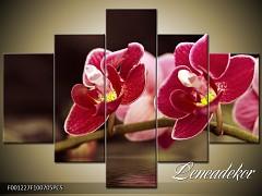 Obraz na zeď-květy- 5D F001227