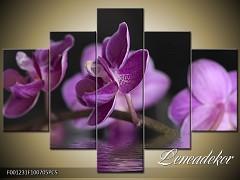 Obraz na zeď-květy- 5D F001231