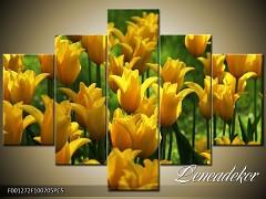 Obraz na zeď-květy- 5D F001272