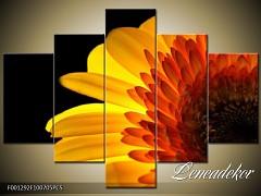 Obraz na zeď-květy- 5D F001292