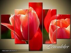 Obraz na zeď-květy- 5D F001300