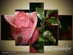Obraz na zeď-květy- 5D F001385