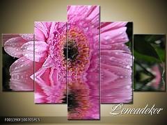 Obraz na zeď-květy- 5D F001390
