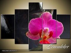 Obraz na zeď-květy- 5D F001396