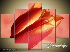 Obraz na zeď-květy- 5D F001444