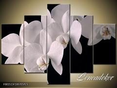 Obraz na zeď-květy- 5D F001513
