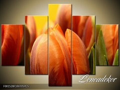 Obraz na zeď-květy- 5D F001528