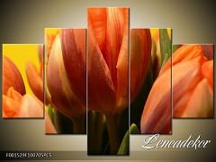 Obraz na zeď-květy- 5D F001529
