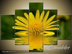 Obraz na zeď-květy- 5D F001548