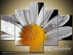 Obraz na zeď-květy- 5D F001561