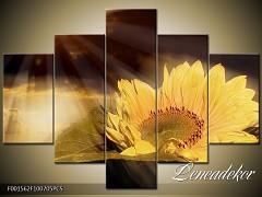 Obraz na zeď-květy- 5D F001562