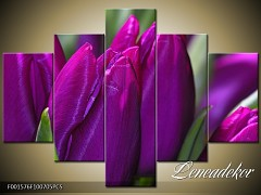 Obraz na zeď-květy- 5D F001576