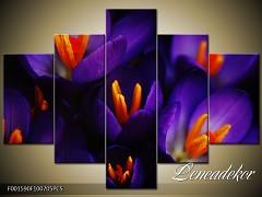 Obraz na zeď-květy- 5D F001590