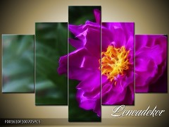 Obraz na zeď-květy- 5D F001610