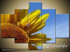Obraz na zeď-květy- 5D F001611