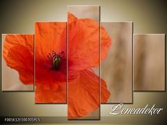 Obraz na zeď-květy- 5D F001612