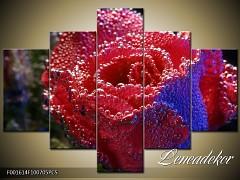Obraz na zeď-květy- 5D F001614