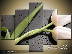 Obraz na zeď-květy- 5D F001618