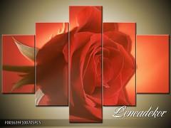 Obraz na zeď-květy- 5D F001639