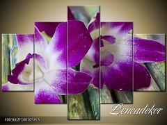 Obraz na zeď-květy- 5D F001662