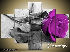Obraz na zeď růže 5D F001728-skladem