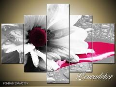 Obraz na zeď-květy- 5D F002053