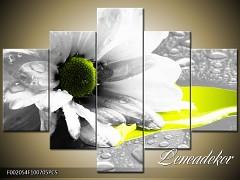 Obraz na zeď-květy- 5D F002054