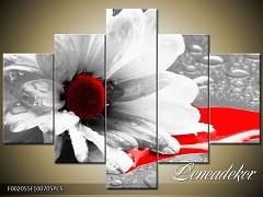 Obraz na zeď-květy- 5D F002055