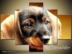 Obraz na zeď-zvířata- 5D F000215