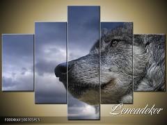 Obraz na zeď-zvířata- 5D F000466