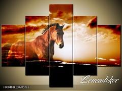 Obraz na zeď-zvířata- 5D F000483