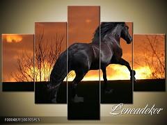 Obraz na zeď-zvířata- 5D F000487