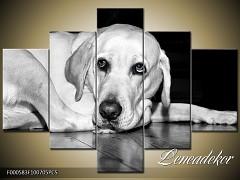 Obraz na zeď-zvířata- 5D F000583