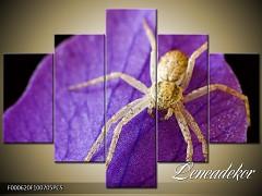 Obraz na zeď Pavouk 5D