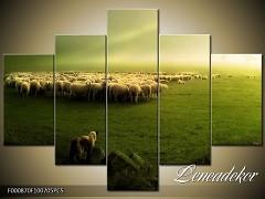 Obraz na zeď-zvířata- 5D F000870