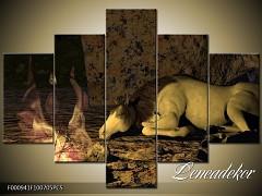 Obraz na zeď-zvířata- 5D F000941