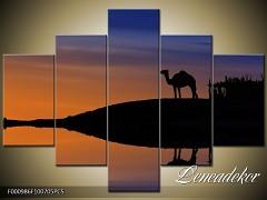 Obraz na zeď-zvířata- 5D F000986