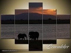 Obraz na zeď-zvířata- 5D F001037