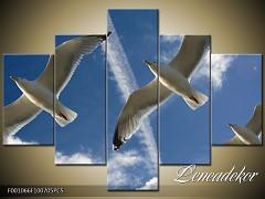 Obraz na zeď-zvířata- 5D F001066